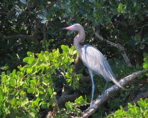 Habitat Restoration and Conservation in Turkey Creek Phase I