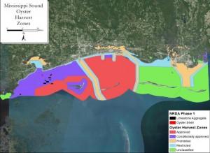 Oyster Restoration and Management Phase I