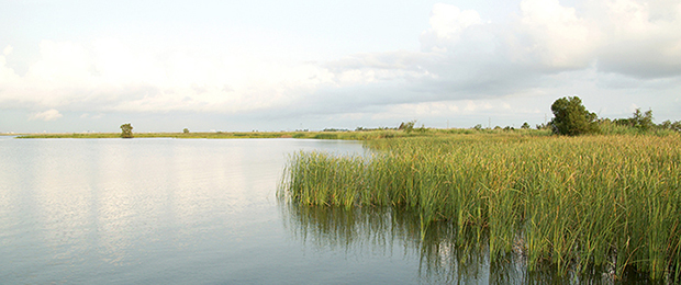 Gulf coastal marsh   Credit: iStock